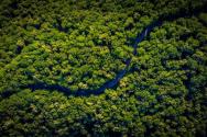 아마존 산림 기후변화 자연